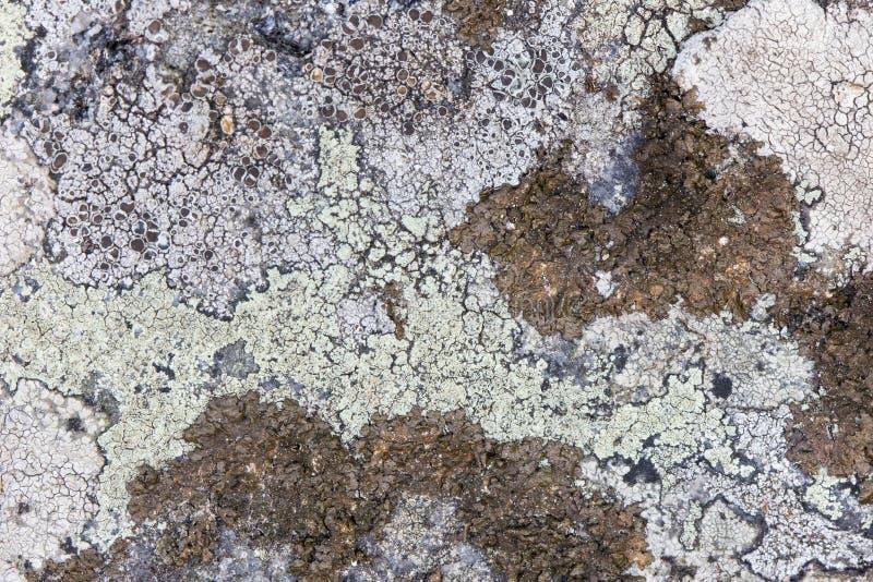 Plan rapproché de différents lichens sur une roche photographie stock libre de droits