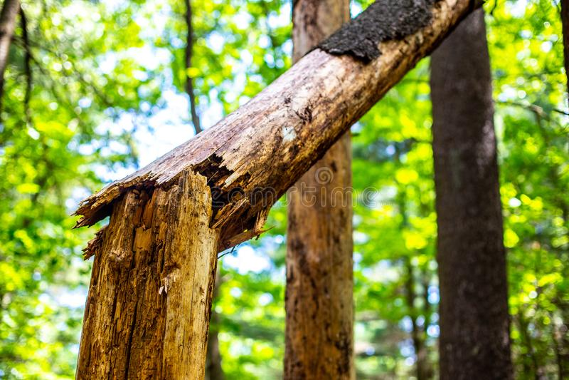 Plan rapproché de fente cassée et d'accrocher d'arbre au côté photographie stock
