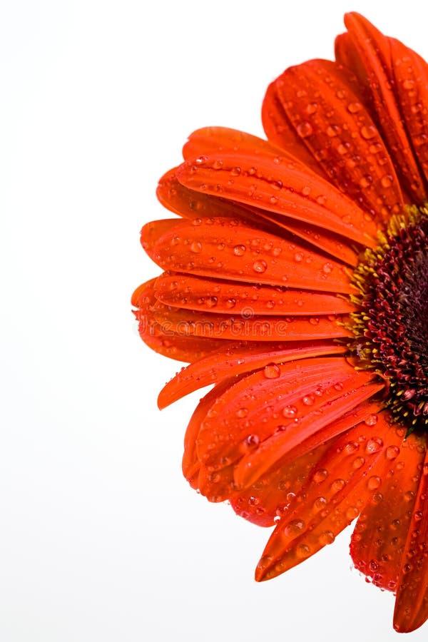 Plan rapproché de fleur image stock