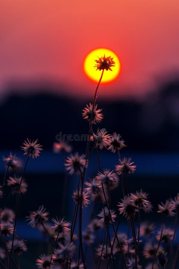 Plan rapproché de fleur d'herbe avec un fond images stock