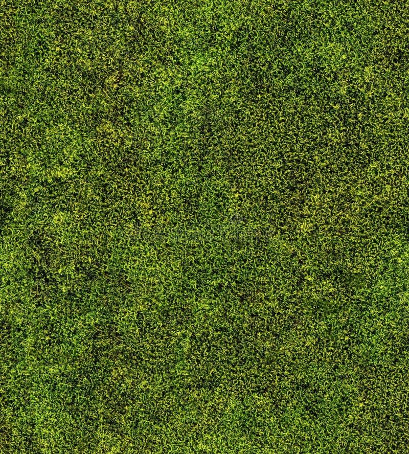Plan rapproché de fond sans couture de mousse verte image stock