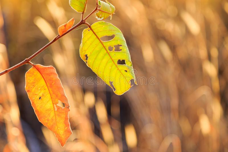 Plan rapproché de forêt défraîchie de gArid dans la saison d'hiver avec la lumière d'or avant coucher du soleil à l'arrière-plan  images libres de droits