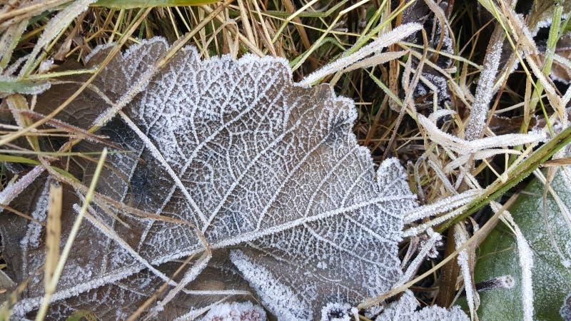 Plan rapproché de Frost sur la feuille dans l'herbe photos stock