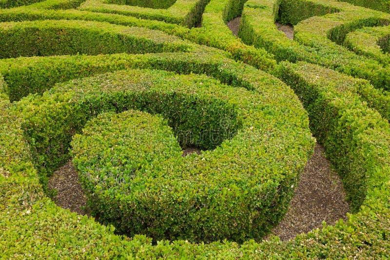 Plan rapproché de jardin formel de noeud photo libre de droits