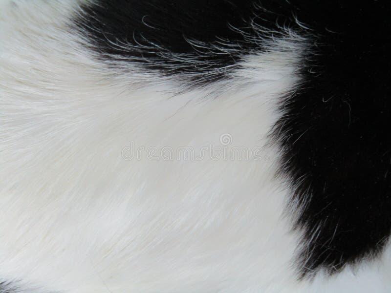 Plan rapproché de Kitty images stock
