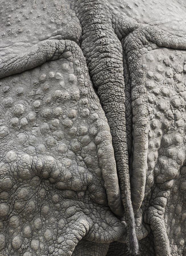 Download Plan Rapproché De L'armure Forte D'un Rhinocéros Photo stock - Image du afrique, indien: 76085412