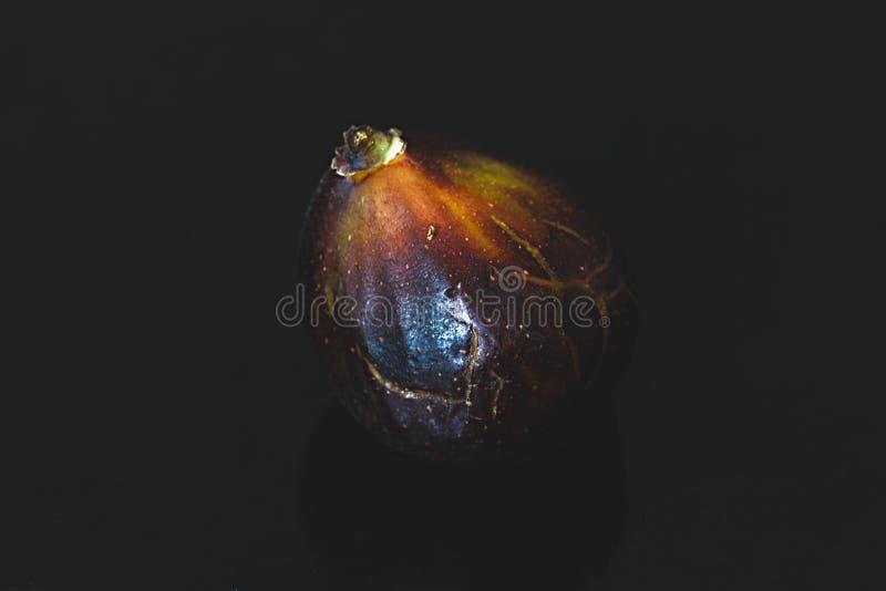 Plan rapproché de la figue mûre fraîche d'isolement sur le noir Fond de nourriture photos stock