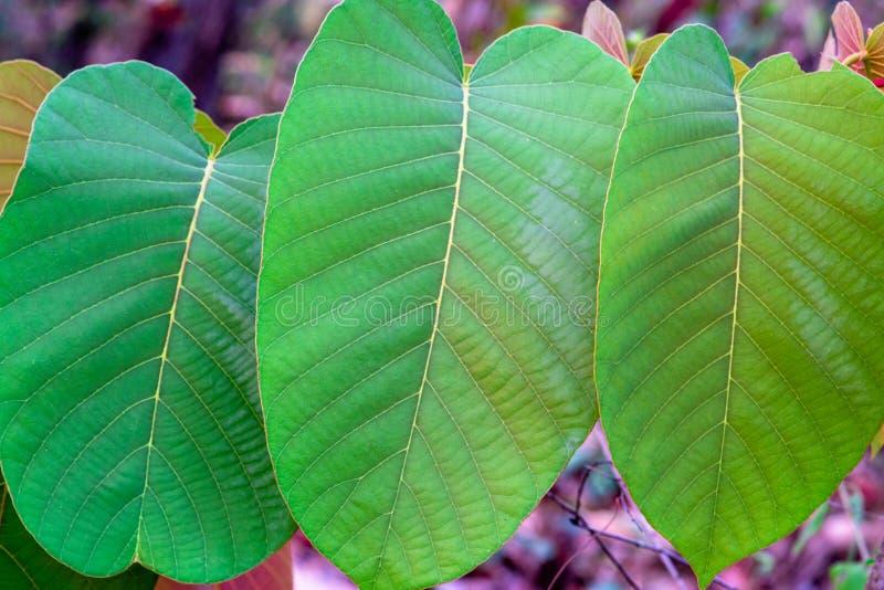 Plan rapproché de la rangée des feuilles vertes avec des détails images libres de droits