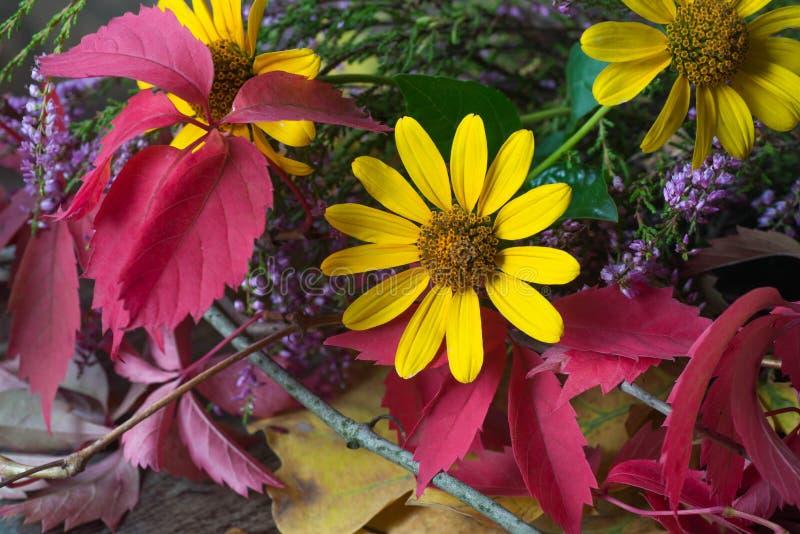 Plan rapproché de la vie de fleurs et de feuilles toujours de chute images stock