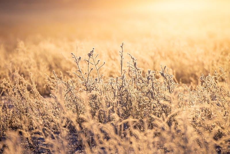 Plan rapproché de lever de soleil pendant l'hiver images libres de droits