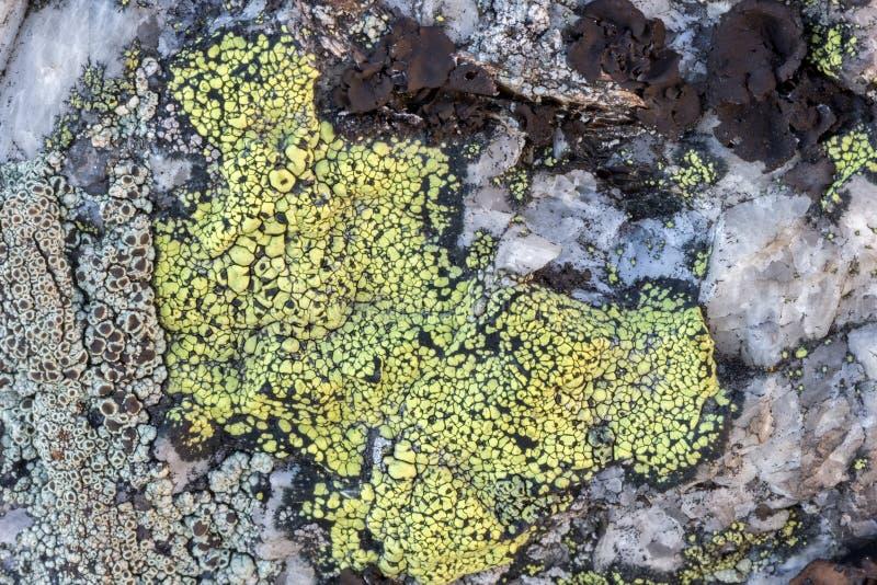 Plan rapproché de lichen de carte sur une roche photo libre de droits