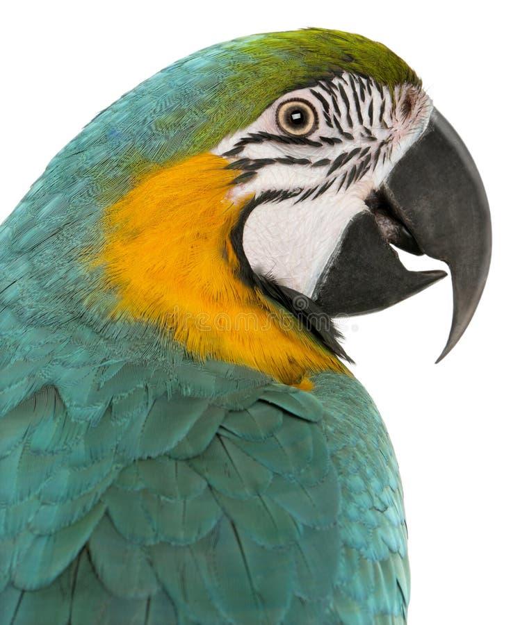 Plan rapproché de Macaw bleu et jaune, Ara Ararauna photographie stock