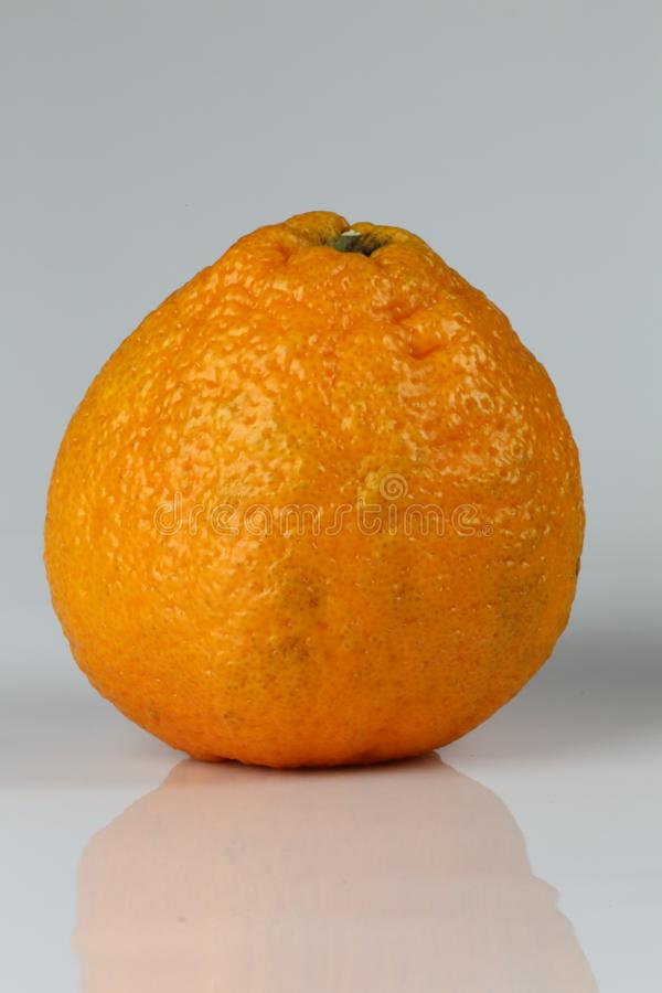Plan rapproché de mandarine de sumo sur un fond blanc image stock