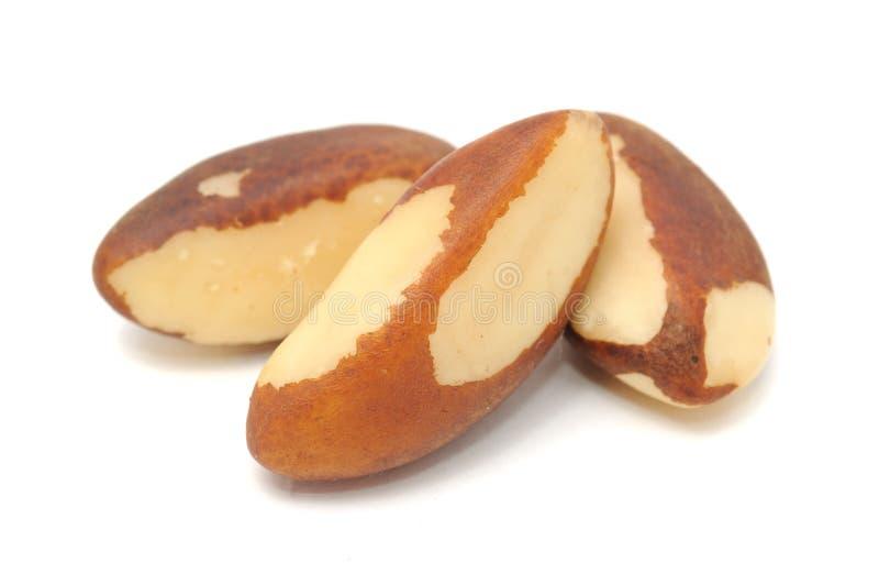 Plan rapproché de noix du brésil photographie stock libre de droits