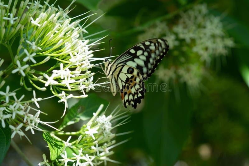 Plan rapproché de papillon de monarque photographie stock