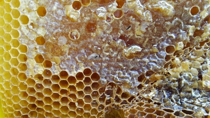 Plan rapproché de peigne de miel images libres de droits