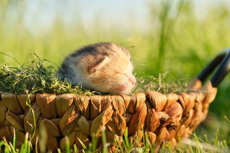 Plan rapproché de petit chaton nouveau-né dans le panier sur l'herbe images libres de droits