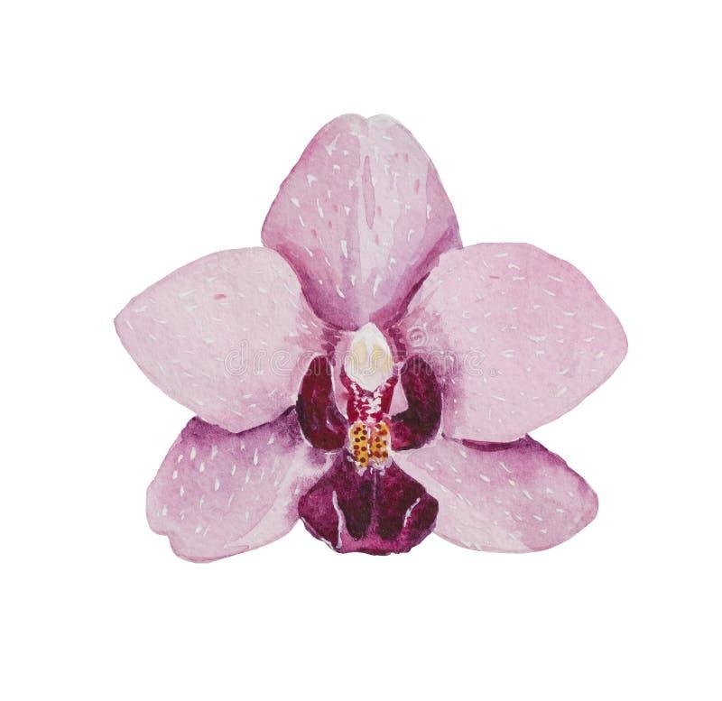 Plan rapproché de phalaenopsis d'orchidée d'aquarelle illustration de vecteur