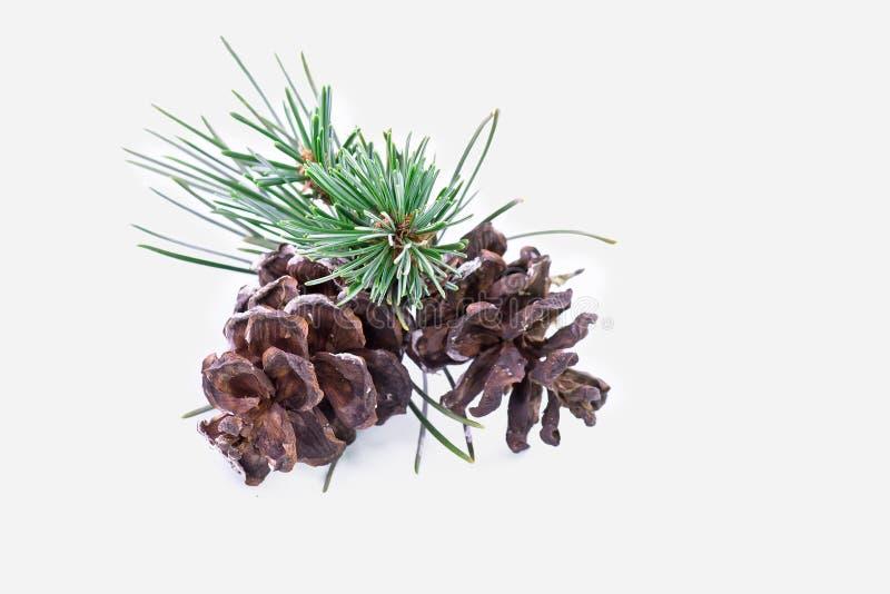 Download Plan Rapproché De Pin De Noël Photo stock - Image du brun, horizontal: 45371188