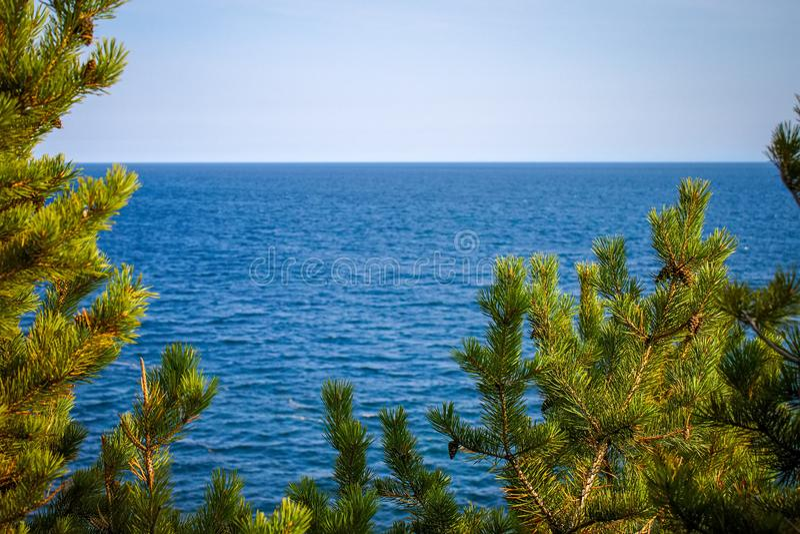 Plan rapproché de pins sur le fond de la mer image libre de droits