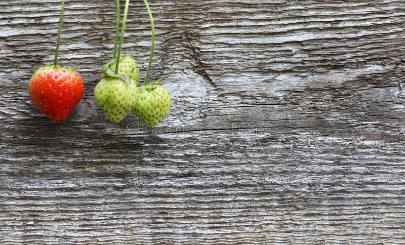 Plan rapproché de quatre fraises sur la branche, sur la vieille rouille en bois grise images stock