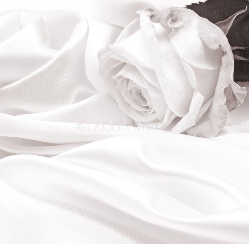 Plan rapproché de rose de blanc comme fond Dans la sépia modifiée la tonalité Rétro type photographie stock