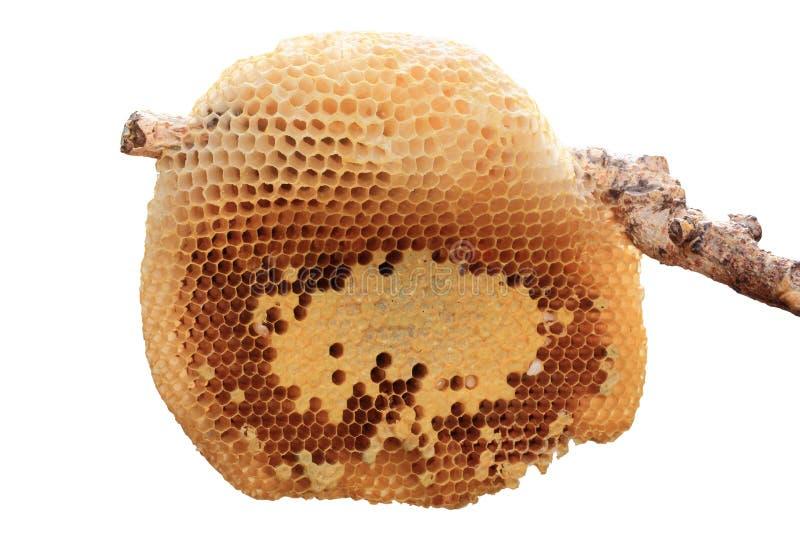 Plan rapproché de ruche photos stock