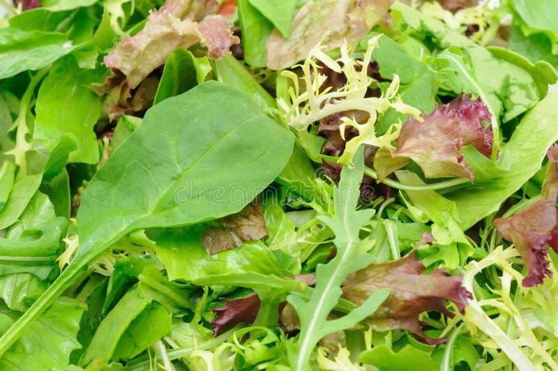 Plan rapproché de salade verte image stock