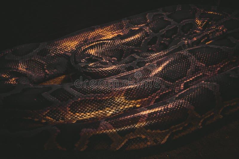 Plan rapproché de Tiger Python photographie stock