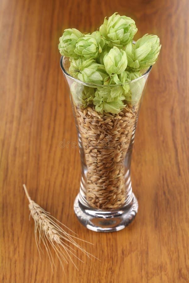 Plan rapproché de verre avec les grains et l'houblon. image stock