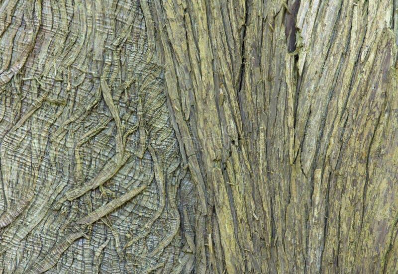 Plan rapproché de vieille écorce d'arbre pour le fond texturisé images libres de droits