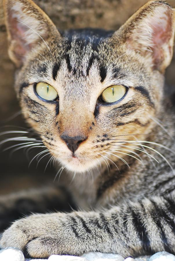 Plan rapproché de visage de chat photos stock