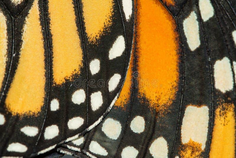 Plan rapproché des ailes de monarque image libre de droits