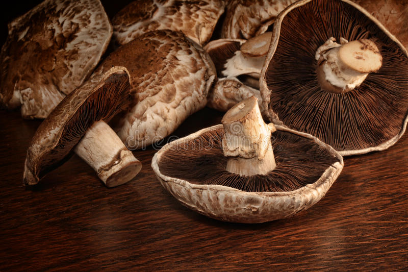 Plan rapproché des champignons de couche frais de portobello image libre de droits