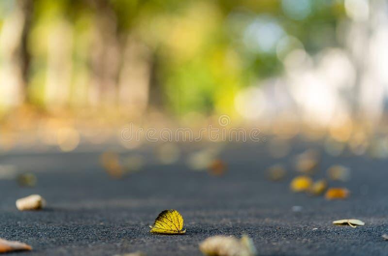Plan rapproché des feuilles jaunes en Sunny Day en parc, fond abstrait avec le foyer sélectif, couleurs d'or en Lettonie photographie stock libre de droits