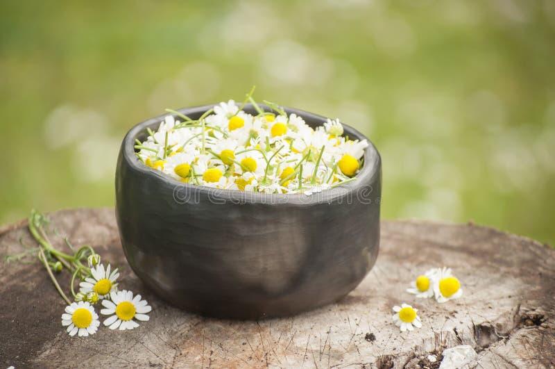 Plan rapproché des fleurs fraîches de plantes médicinales de la camomille pour le thé sain dans la tasse de poterie noire image stock