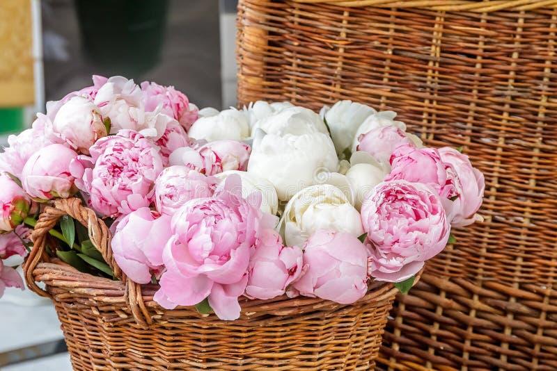 Plan rapproché des fleurs roses de pivoine image libre de droits