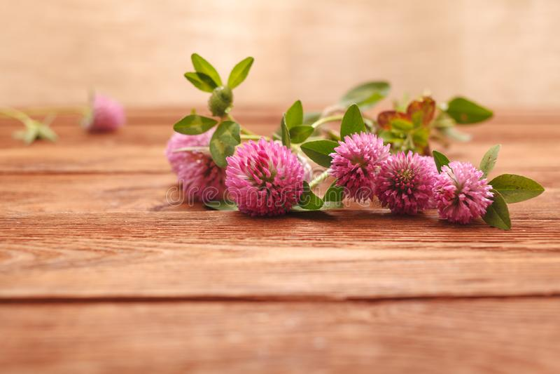 Plan rapproché des fleurs roses de trèfle sur la table en bois Trèfle de plante médicinale Fond de jour du `s de rue Patrick images stock