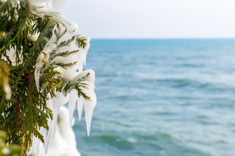 Plan rapproché des glaçons sur l'arbre de cèdre avec le beau lac bleu à l'arrière-plan images stock