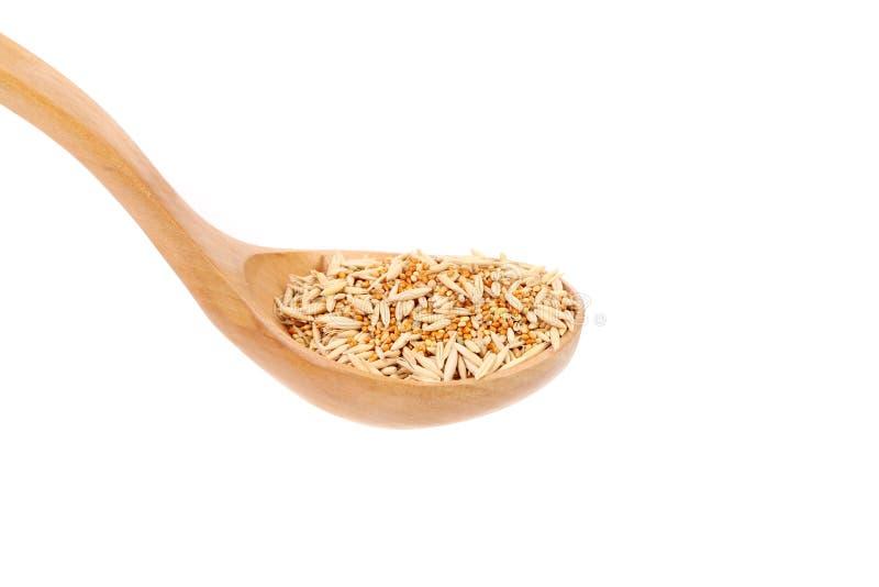 Plan rapproché des grains de blé. image stock