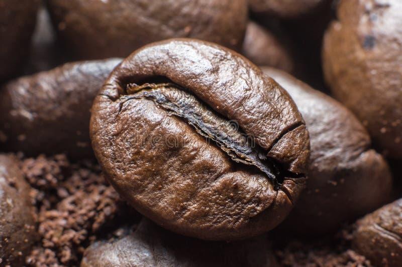 Plan rapproché des grains de café photo libre de droits