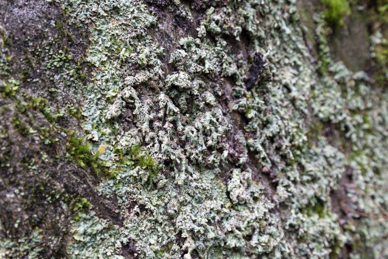 Plan rapproché des lichens sur une roche photographie stock