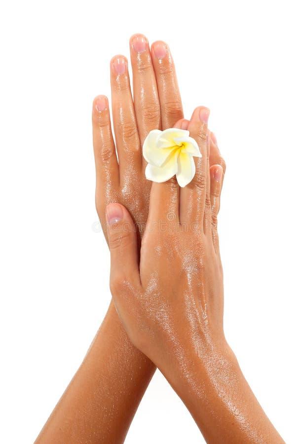 Plan rapproché des mains femelles en huile tenant la fleur dessus image libre de droits