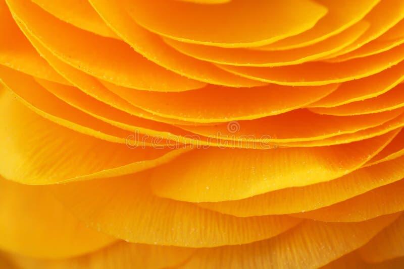 Plan rapproché des pétales d'une fleur jaune images stock