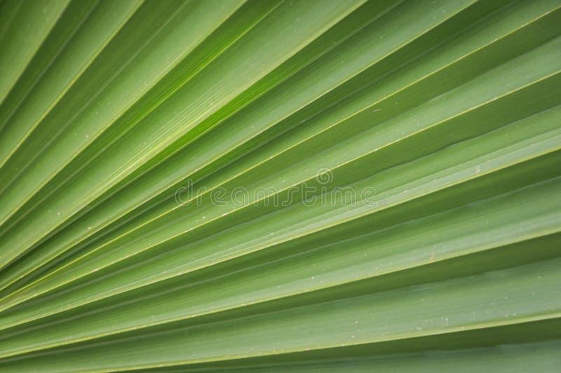 Plan rapproché des palmettes vertes photo libre de droits