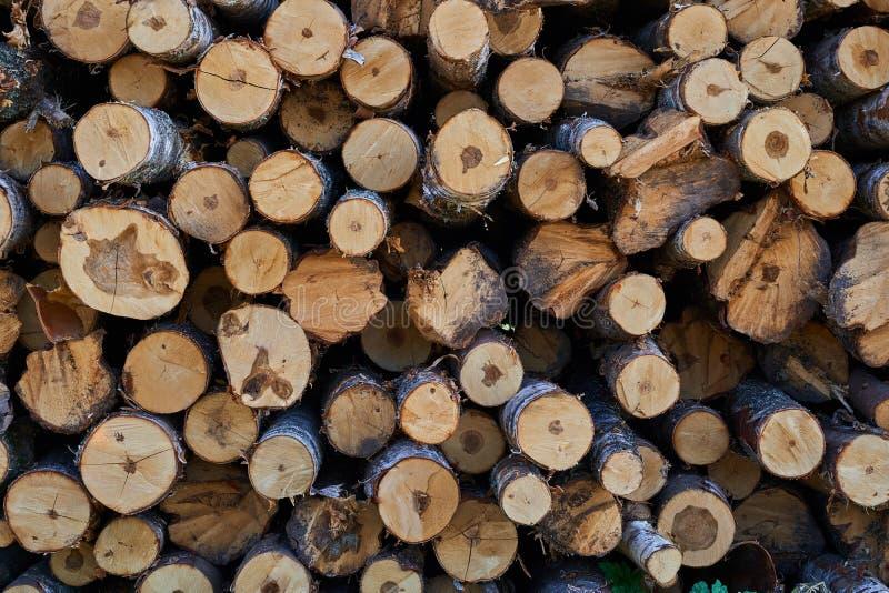 Plan rapproché des rondins des arbres en nature beaucoup de rondins cutted photographie stock