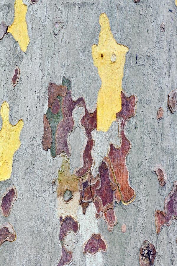 Plan rapproché du modèle de camouflage d'un arbre plat images libres de droits