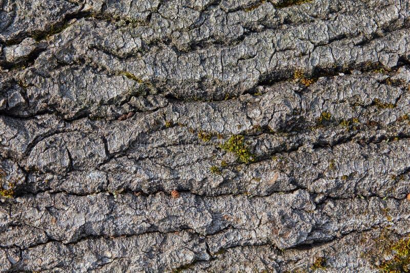 Plan rapproché en bois de structure, texture pour le contexte photo stock