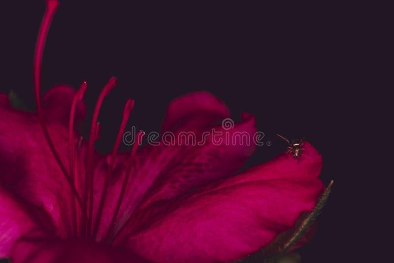 Plan rapproché extrême d'un beau wildflower rouge dans une forêt photos stock