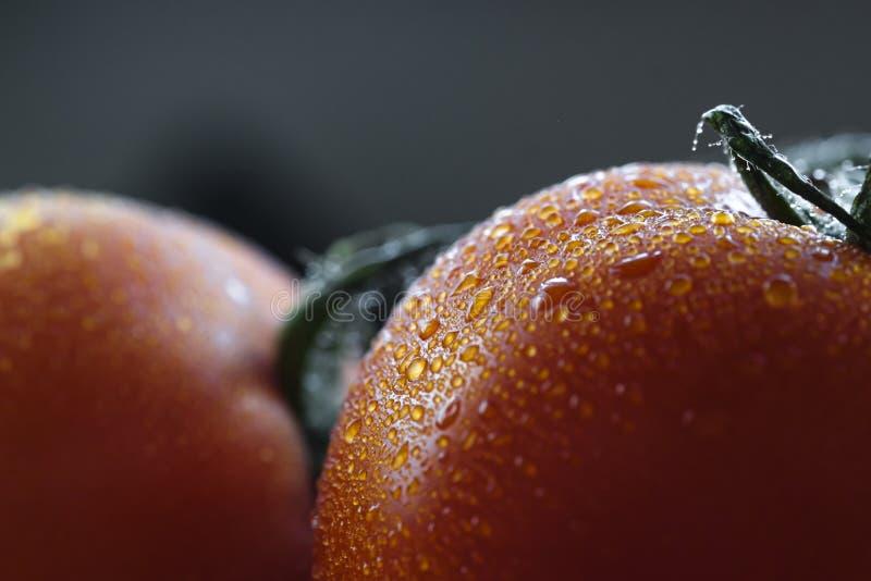 Plan rapproché extrême d'une tomate mûre humide Fond de fin vers le haut d'image d'une tomate fra?che avec des gouttelettes d'eau photographie stock libre de droits